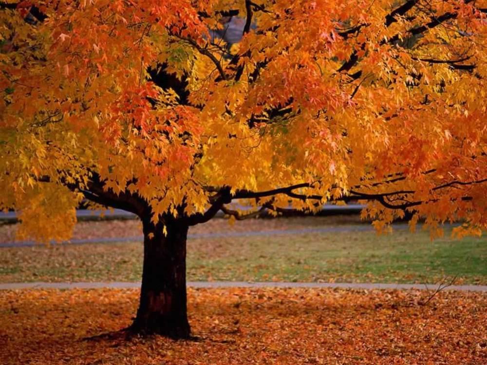 Se pr parer pour la saison d automne sant beaut prosp rit - Poinsettia perd ses feuilles ...