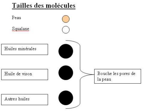 Taille_des_molcules